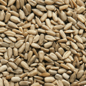 Semillas de girasol convencional