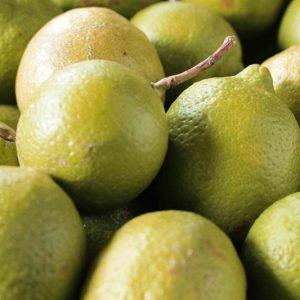 Limón Salta Agro