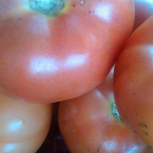 Tomate Sasaki organico certificado