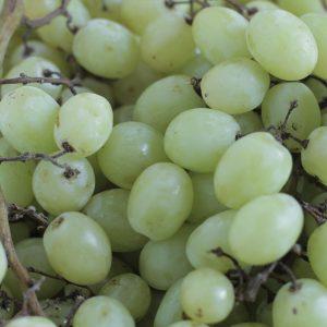 Uva blanca organica