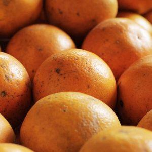 Naranjas Orgánico