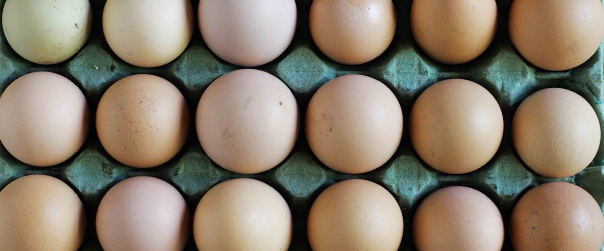 maple huevos gea
